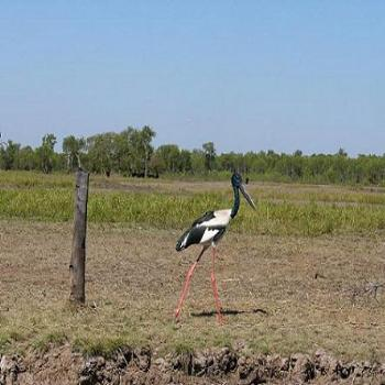 Jabiru in Northern Territory, Anne Albany