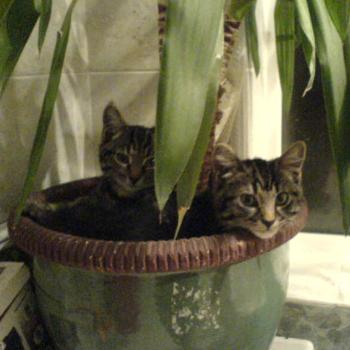 Plant Pot Cats! DJ & Soldier