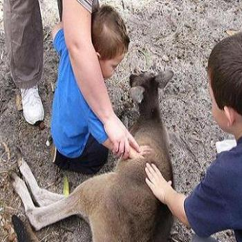 Johnathan and Bailey patting a kangaroo (Anne/Albany)