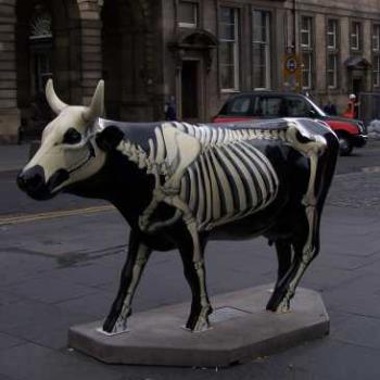 Edinburgh - Cow Parade -scowleten?