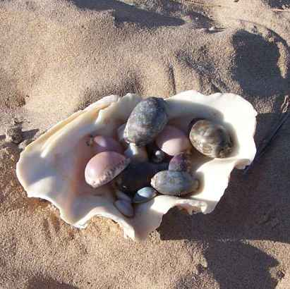 a shell full of cowries
