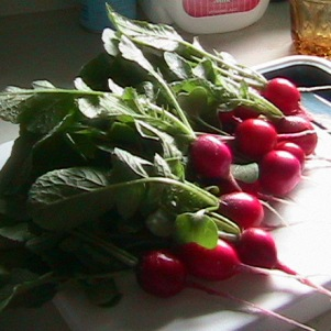 Radishes from our garden