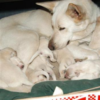Adele and her 11 pups!