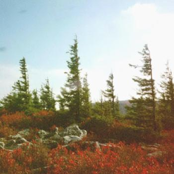 Dolly Sods, West Virginia, where the wind blows hard enough to shape the trees