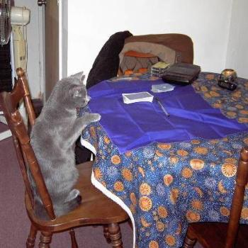 Buddy doing tarot reading