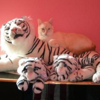 My cat Alex and the Tiger