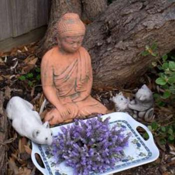 Buddha cats and lavendar
