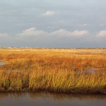 Fall marsh grass