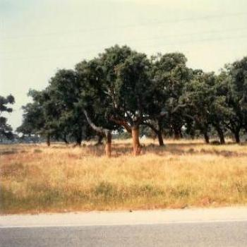 Portugal, cork tree