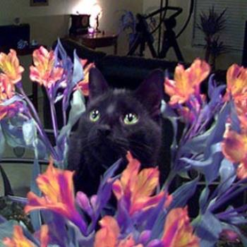 Clyde loves flowers