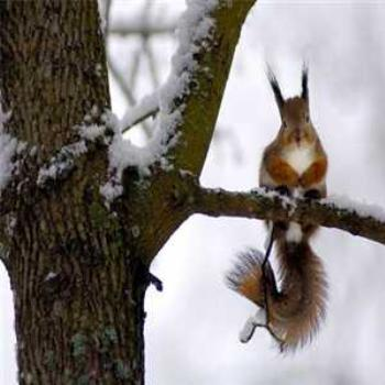 Cute squirrel freezing his nuts off!
