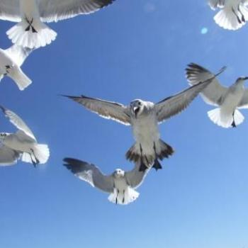 Hand feeding the gulls (ouch!), Cocoa Beach, Florida - Eileen (Surrey, England)