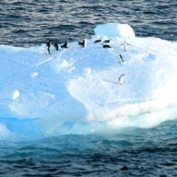 Penguins on an iceberg, Antarctic Peninsula (Robin/Kalgoorlie)