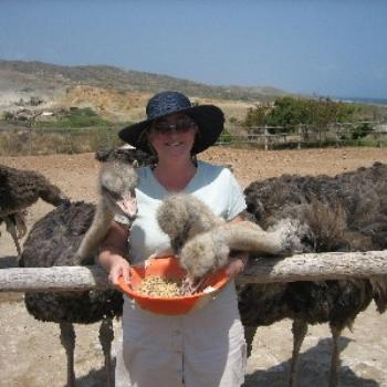 Feeding Ostrich in Aruba