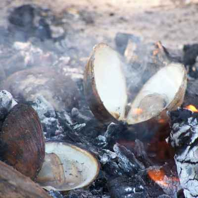 Cooking up mud mussells on an open fire - Tiwi Islands NT