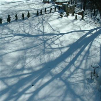Tree shadows in the N.E. snow