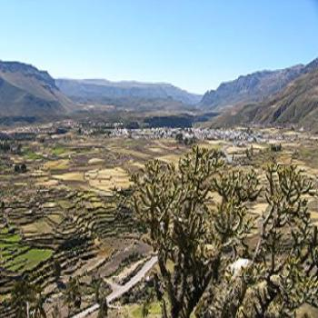 Incan terraced hillsides in Colca Canyon Peru