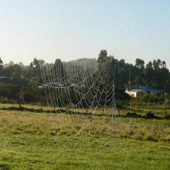 Early morning cobwebs