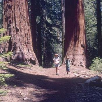 Hiking in the Giant Sequoias