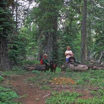 Hiking near Lake Almanor, CA. The dog carries his own gear.