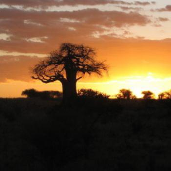Sunset on Baobab Tree Tanzania