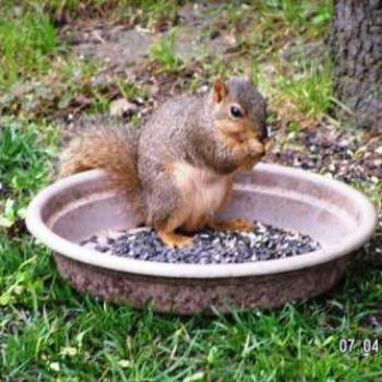 Squirrel Having Breakfast