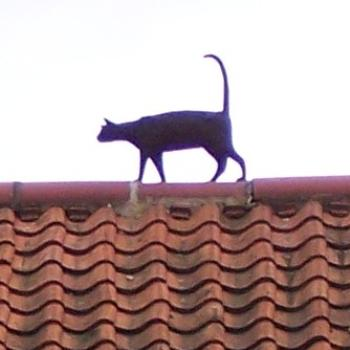 Roof Cat, York, UK