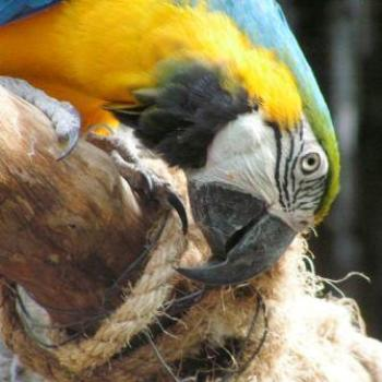 Blue & Gold Macaw Moody Gardens, Galveston Texas  Sue/OK