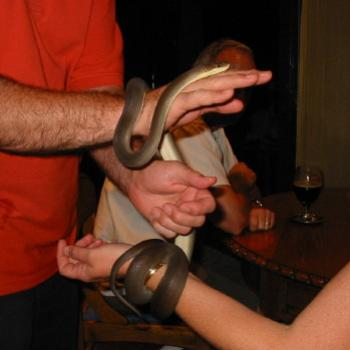 Playing with an Olive Python Oct2002 Kate/Sydney