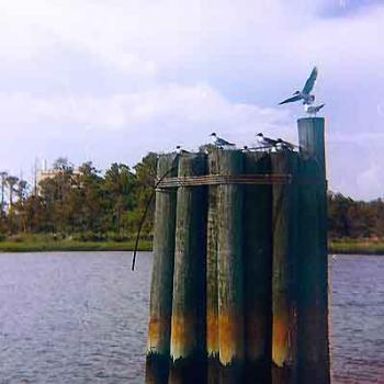Pilings at the ferry landing on the Cape Fear River in Southport, NC \ kay NC