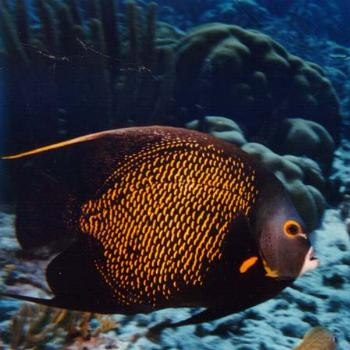 A fish at the Fort Fisher NC Acquarium / kr NC