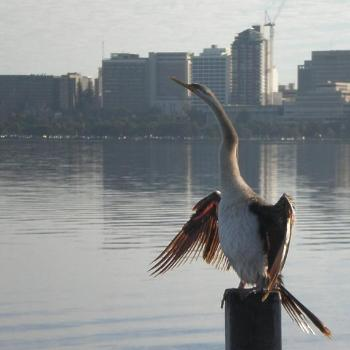 S. Perth bird looking towards East Perth across the river/Colleen