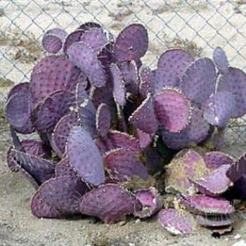 Cacti in the California desert  Sue / OK