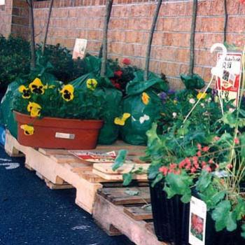 Potted flowers at the supermarket / kay NC