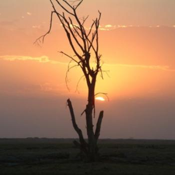 Tree at sunset, Amboseli, Kenya (Eileen, Surrey UK)
