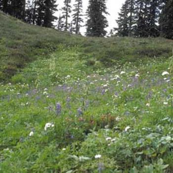 Meadows, above Hannegan Pass, Cascades