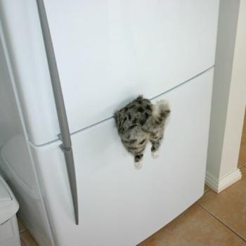 "Refrigerator magnet for all you ""cat lovers"""
