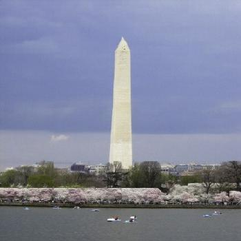 Cherry Blossom at Washington Monument