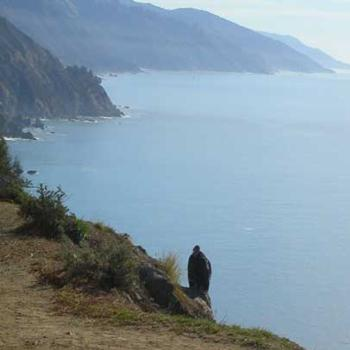 Condor on Cliff, Big Sur, California