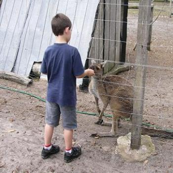 Johnathan (age 6) feeding a joey (Anne/Albany)