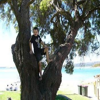 Johnathan climbing a tree at Emu Point at Granny's birthday, Anne Albany