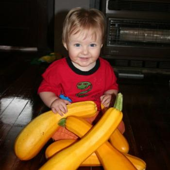 Elias surveys our bumper crop of yellow zucchini