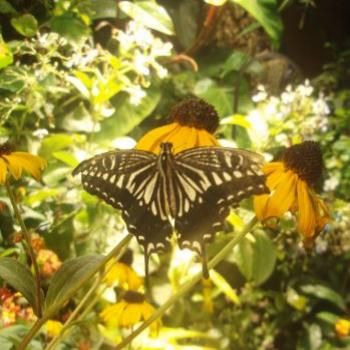 Butterfly park, Washington D.C. appy/india