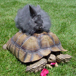 Fluffy the Sulcata Tortoise and Bunny Friend