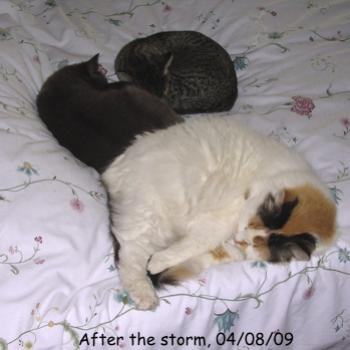 This was taken the day after a severe hailstorm and is the closest these three have ever been together.