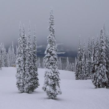"""Snow Ghosts"" in the clouds - Silver Star, British Columbia, January 2010"