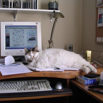 Calypso having another hard day at the office.