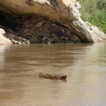 Floating log on Green River in Dinosaur Nat'l Monument Sep 2010 by Wilodene from Utah