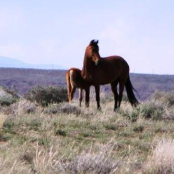 Mare with foal on unfenced BLM lands of Utah Apr 2011 by Wilodene
