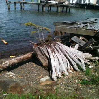 old docks and driftwood by shore